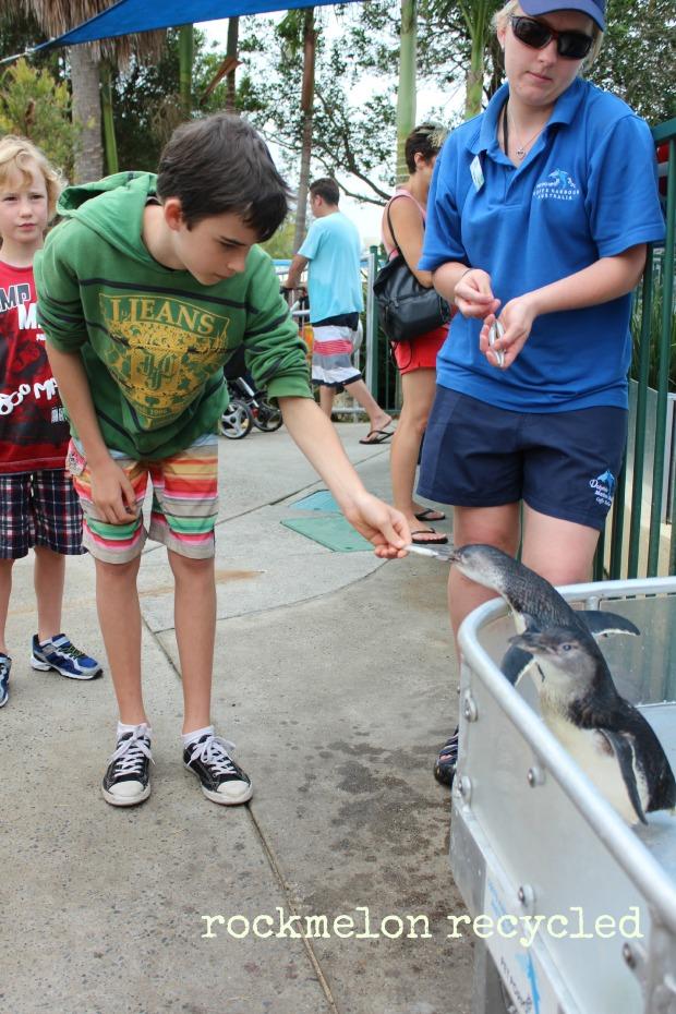Dolphin Marine Magic Coffs 1