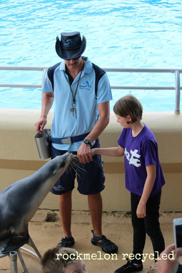 Dolphin Marine Magic Coffs 3
